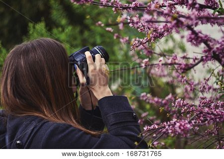 Girl taking photo of purple blossoming tree