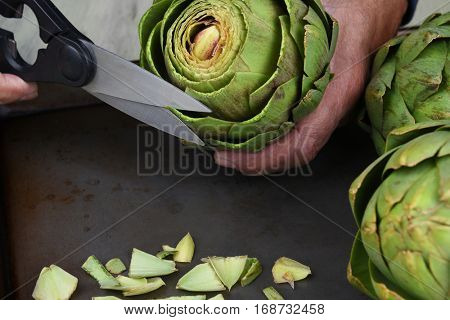 Closeup of a cook using kitchen shears to prepare an artichoke for cooking. The man is cutting the tips off the leaves.