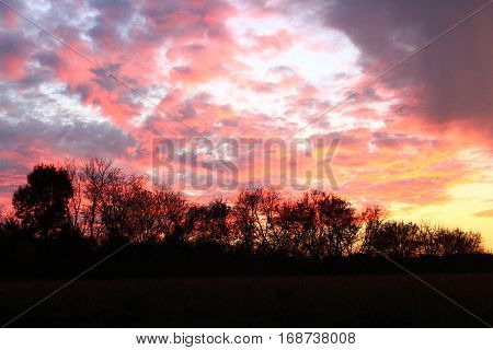 sunset scene over a field with silhouetted trees