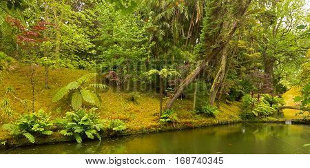Flora diversity of Terra Nostra Garden in Azores Portugal. Scenic old park with streams in autumn. poster
