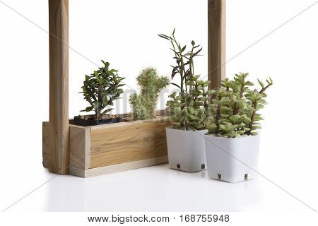Cactus and small plant in wooden box and white plastic flowerpot on white background.