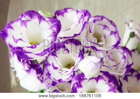 bouquet of vivid flower lisianthus