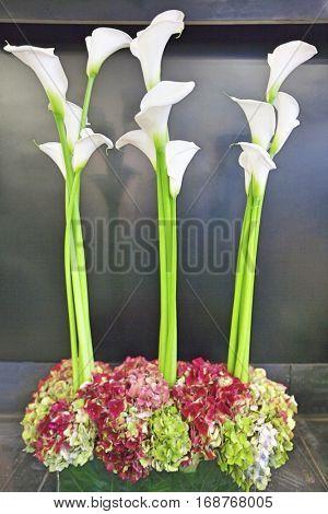 Three calla lily kept on the floor