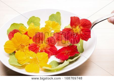 Orange nasturtium flower held with a fork above flowers