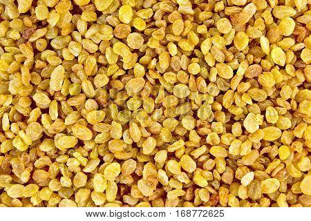 Raisins Yellow Texture