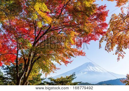 Mt. Fuji and autumn foliage at Lake Kawaguchi