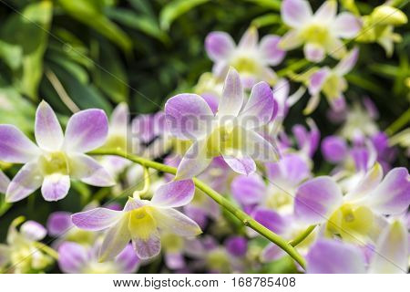 Many Orchids Close Up