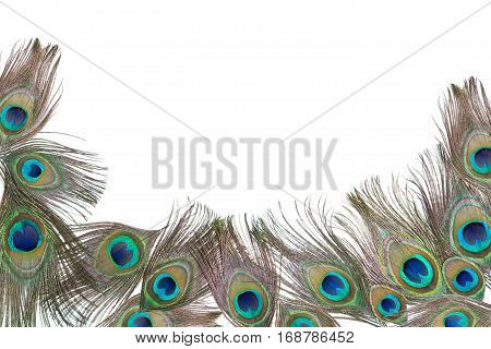 Group of bright peacock feathers on the white background, lying flat, with empty place for your text, top view