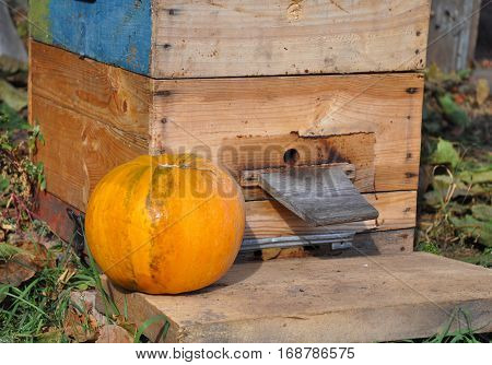 Honey Bees Swarming on their Beehive with Pumpkin in Autumn Blurred Image