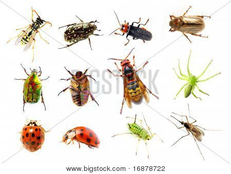 Garden insect - great collection on white background. poster