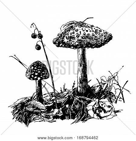 drawing is not edible mushroom fly agaric, sketch graphics hand drawn ink vector illustration