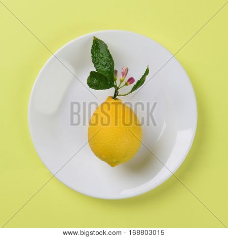 Fresh picked lemon with stem and flowers on a white plate and yellow background. High angle shot in Square format.