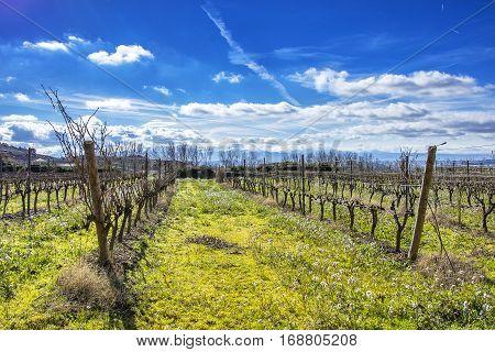 vineyards in winter in La Rioja in Spain
