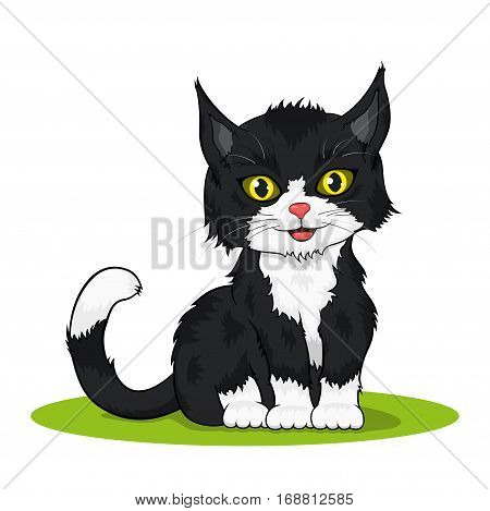 picture of a small black and white colored cute kitten isolated on white background