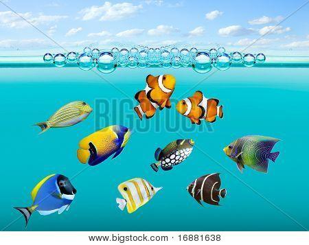 Tropical reef fish.