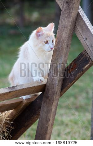 Funny Young Cat Hunting On A Farm
