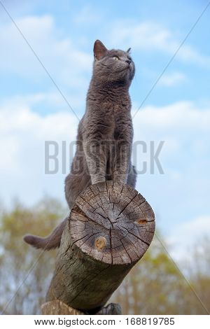 Gray Cat On A Log