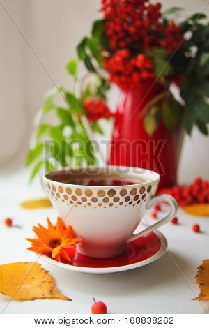 autumn still life with rowan in red vintage vase and a cup of tea or coffee