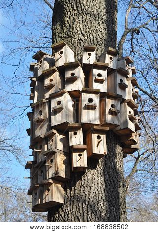 Bird Houses in Early Spring Weather. Bird Houses in narrowness.