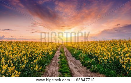 Field of blooming flowers in spring field despite road
