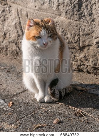 Portrait of beautiful ginger cat on asphalt. Red cat. Red-headed cat. Portrait of looking ginger cat.