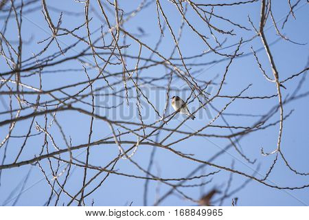 Photo of European goldfinch resting on a tree branch