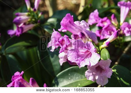 Purple flowers with beautiful on nature background