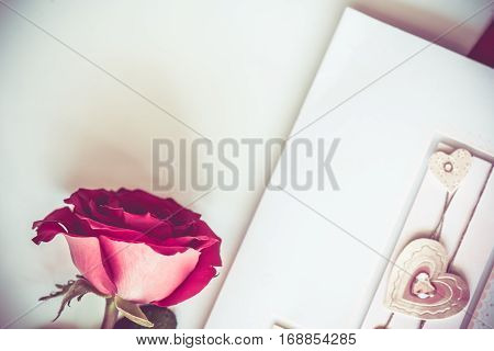 Valentine's day love and sweetest concept, rose flower.  Toned holiday background with copy space.