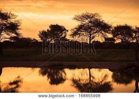 Sunset In South African Etosha Park On The Shore Of The Lake In The Middle Of Wild Nature.