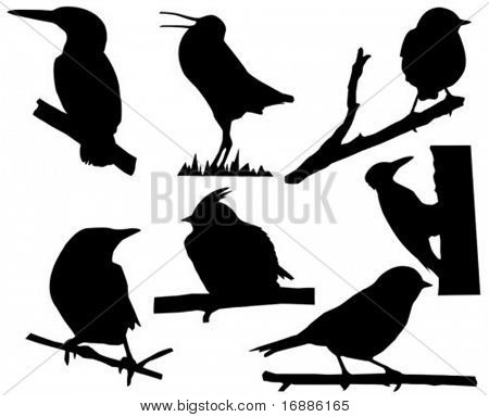 vector silhouette of the small birds on branch tree