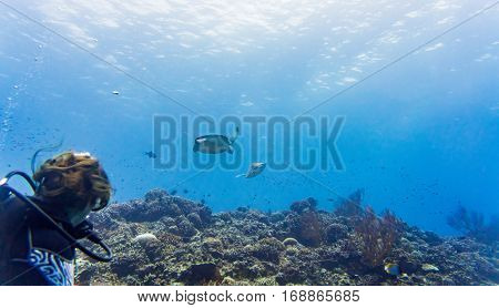 Tourist diving at coral reef and watching Green sea turtle