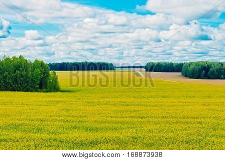 View of the cornfield and the woods on a summer day