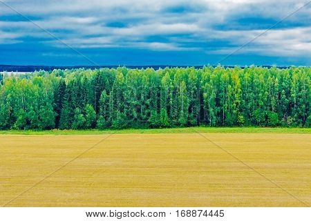 View of the harvested field and the woods on a summer day