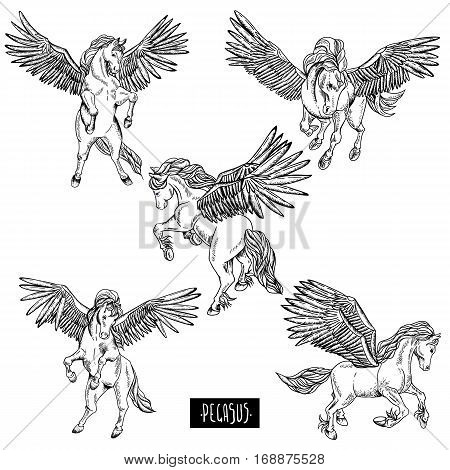Vintage vector black and white set of winged pegasus, animals design elements, outline collection