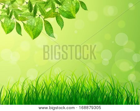 Spring background. Young leaves and grass in solnechnogm light. Natural background with bokeh. Summer. A park. Regeneration. Close-up. Nature awoke.