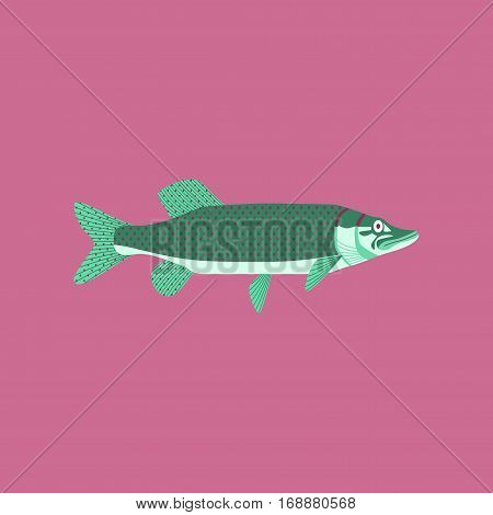 Vector illustration in flat style fish pike