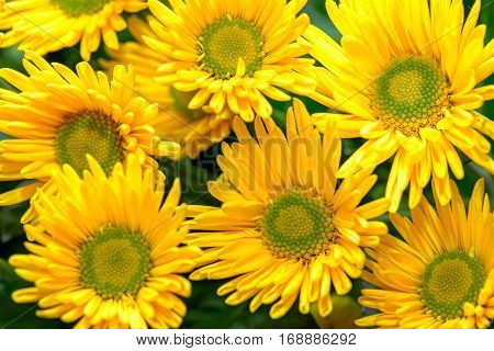 Close up view of yellow blooming flowers