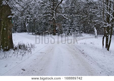 The photo shows the forest road fork. It's winter. Earth and tree branches cover layer of snow. The surface of the road is unpaved, uneven and bumpy. Wiedoczne are clear rut.