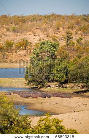 In South Africa  Wildlife  Water   Plant And Tree