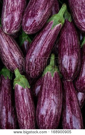 Eggplants closeup. Colorful vegetables. Fresh purple eggplants.