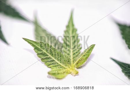 Small cannabis leaf isolated over white background - medical marijuana concept