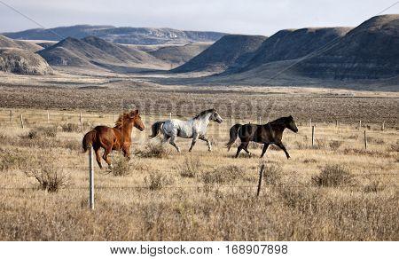 Badlands Canada Saskatchewan Big Muddy horses in pasture