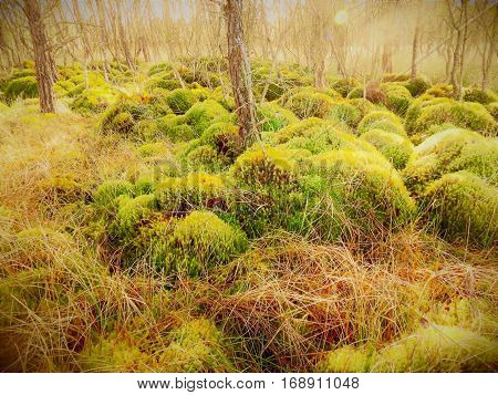 Getting stuck in a moss bog Chobham common