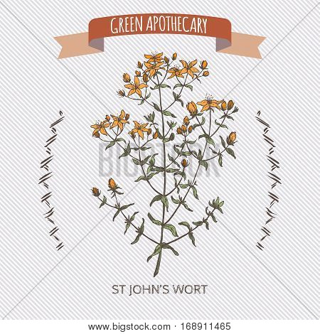 Hypericum perforatum aka common Saint John wort color sketch. Green apothecary series. Great for traditional medicine, gardening or cooking design.