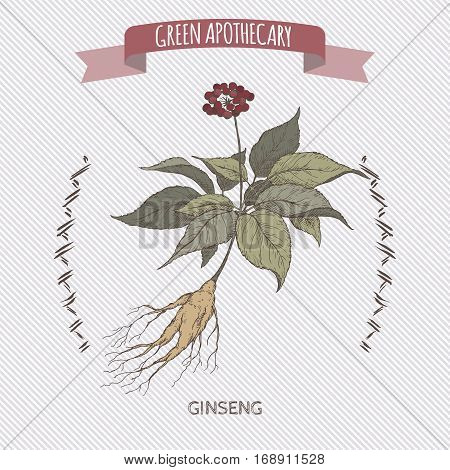 Panax quinquefolius aka ginseng color hand drawn sketch. Green apothecary series. Great for traditional medicine, gardening or cooking design.
