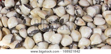 Top View Of Fresh Shellfish Cockles