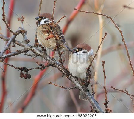 two birds sit among the branches hunched