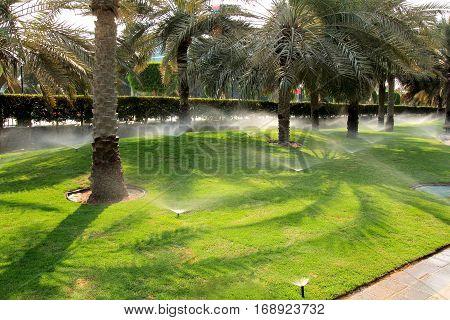 watering lawn grass in Dubai. sprinkler spaying water.