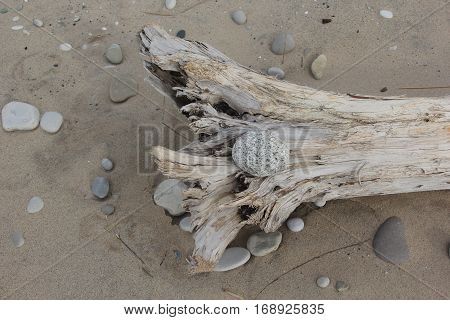 A piece of drift wood on a beach surrounded by drift wood.