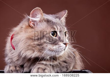 Scared Cat On Brown Background